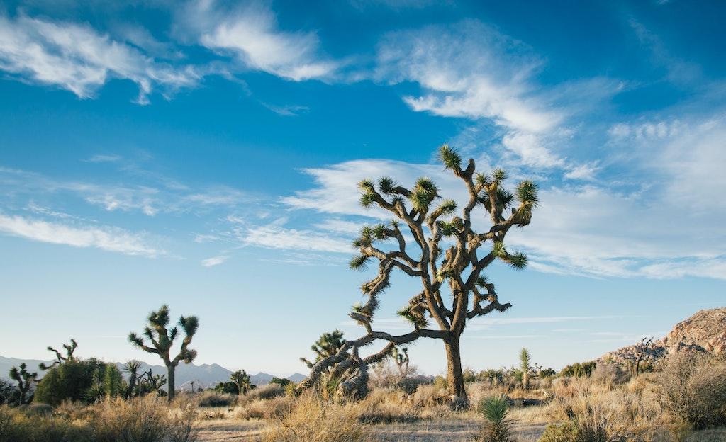 砂漠の植物や生き物が生息できる秘密の鍵は「トレハロース」