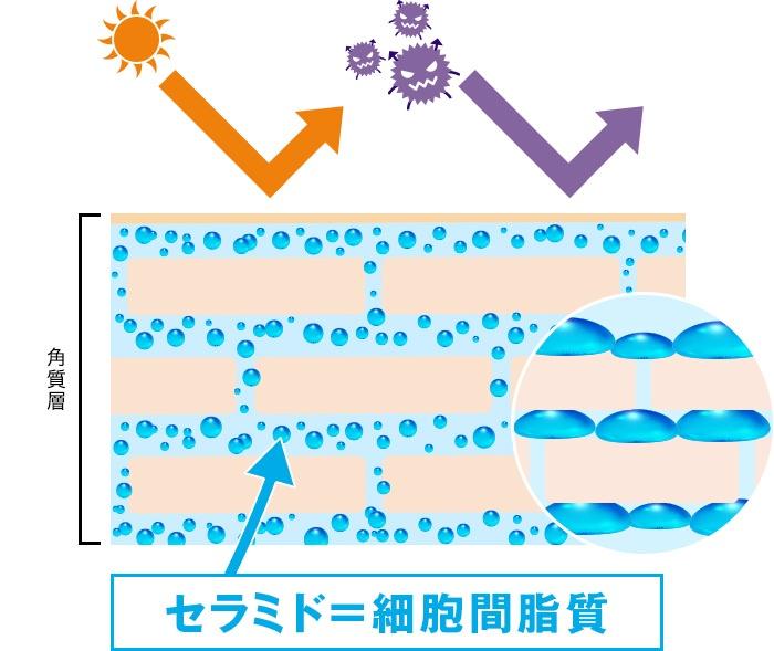 3大保湿成分「セラミド」の肌への役割