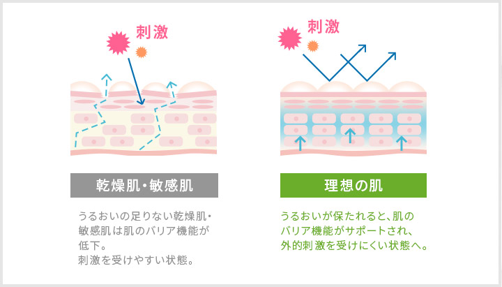 乾燥によって敏感になった肌はバリア機能が低下。引用:セタフィルHP