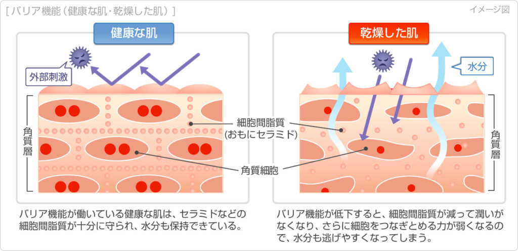 肌の乾燥状態とは。引用:くすりと健康の情報局HPより