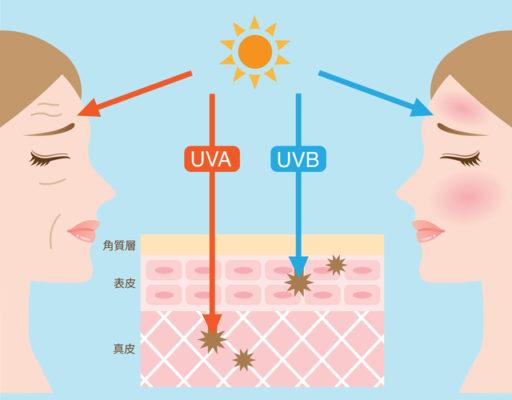 紫外線(UVA・UVB)の違い。引用:アンチエイジング43HPより