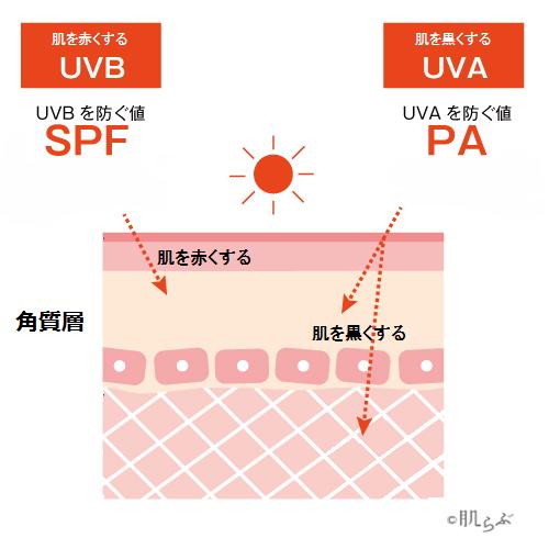 日焼け止めの性能「SPF」と「PA」とは。引用:LAURIER PRESS