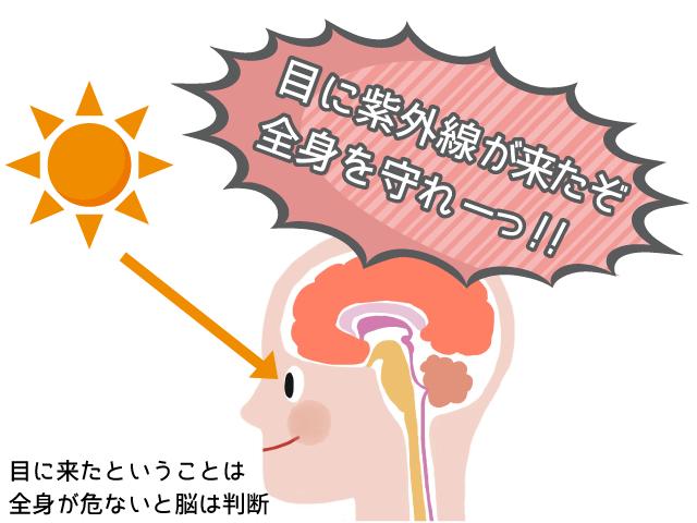 目から紫外線が入ると脳がメラニンを作る指令を出す!するとシミができる!引用:夫婦手帳