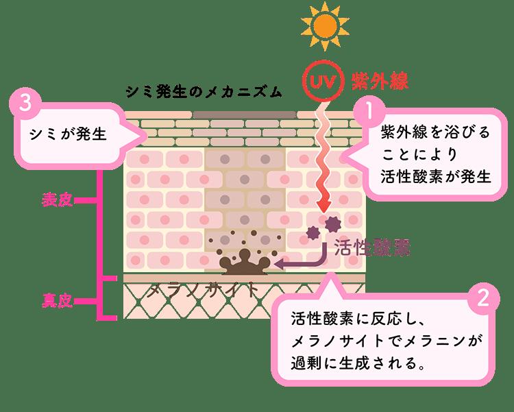 紫外線がきっかけでメラニンが生成されシミになる。引用:フラコラHP